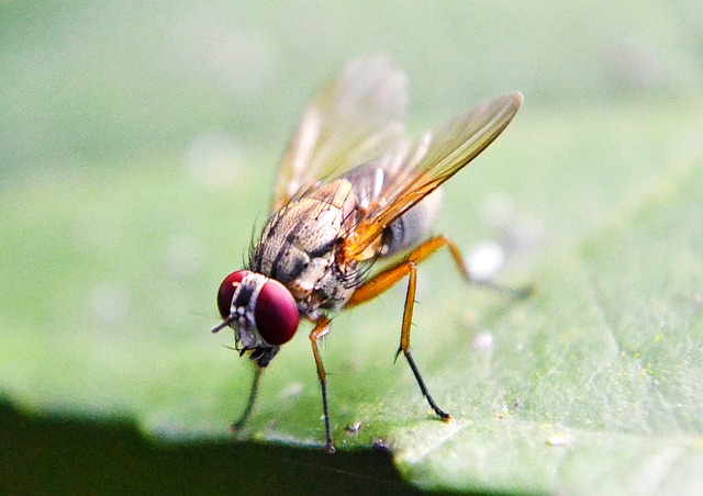 fruit fly exterminator Surrey,Delta